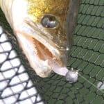 Fische aus Gummi zum Angeln